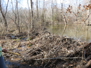 Beaver dam, Franklin Co, ALB photo